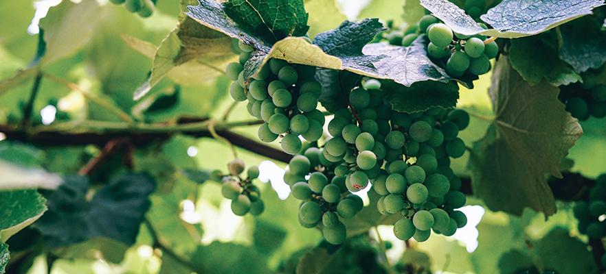 Piave river wine route